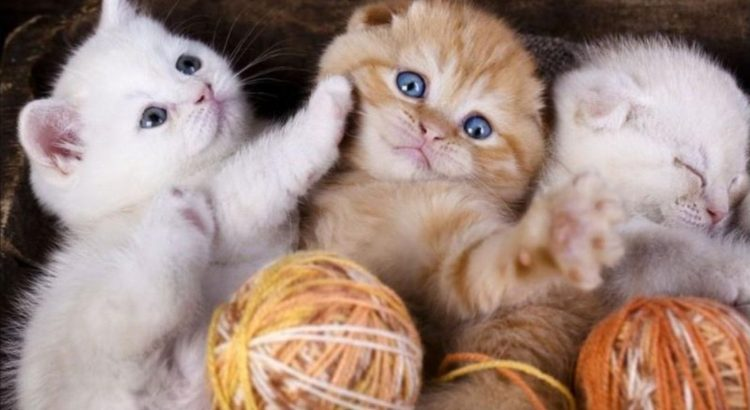 Paid-Job-For-Cute-Cat-Lovers-Who-Loves-To-Be-With-Them-For-Most-Of-Their-Time-750×410